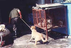 150 dogs rescued from Meat Market, China