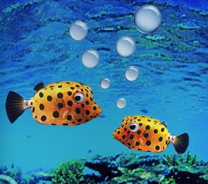 Songs For Tropical Fish